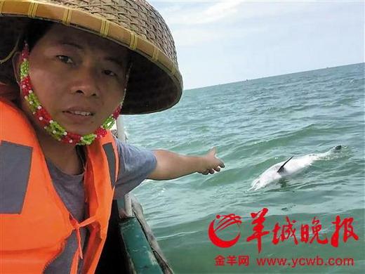我国首次引进的中华白海豚顺利落户横琴长隆